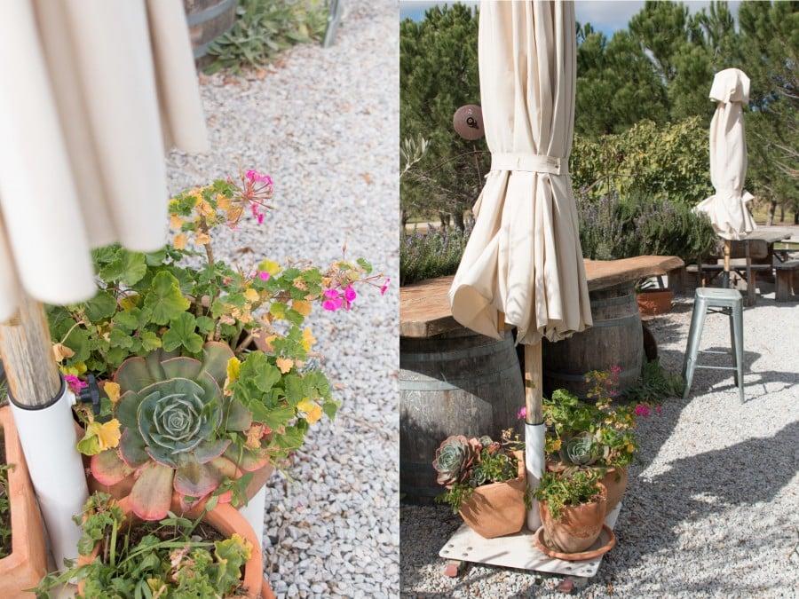 succulent garden Lowe Wines