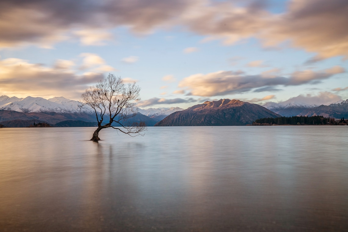 That Wanaka Tree at Sunset New Zealand