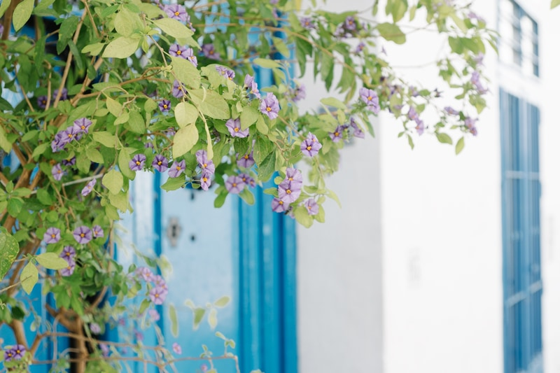 blue door and pretty flowers in Frigiliana