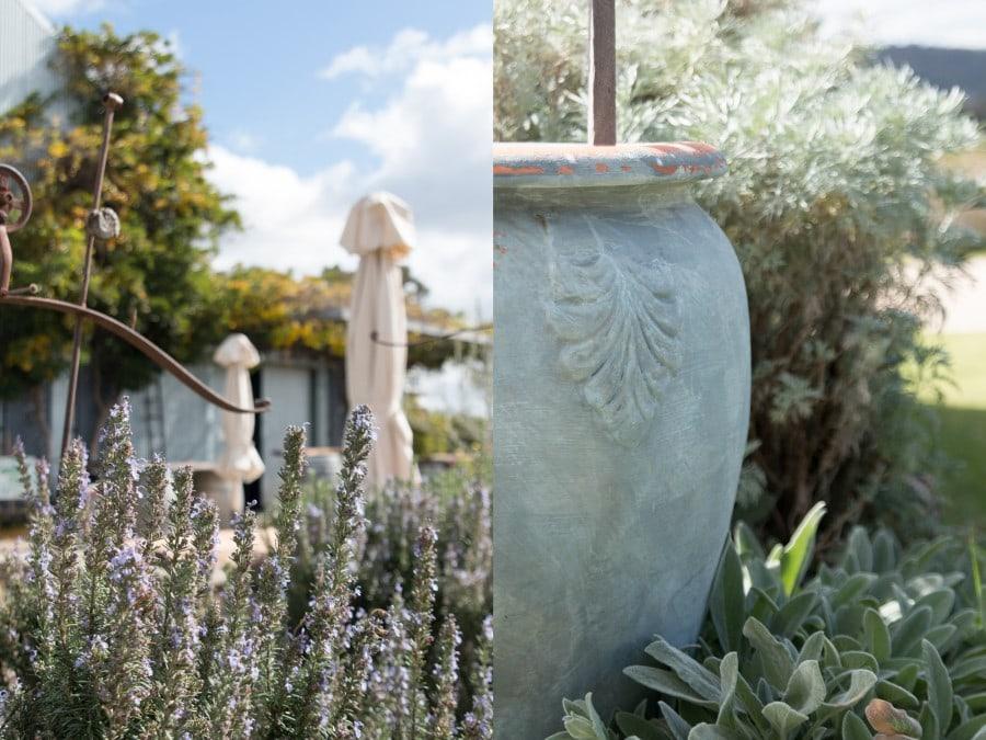 lavender fields Mudgee